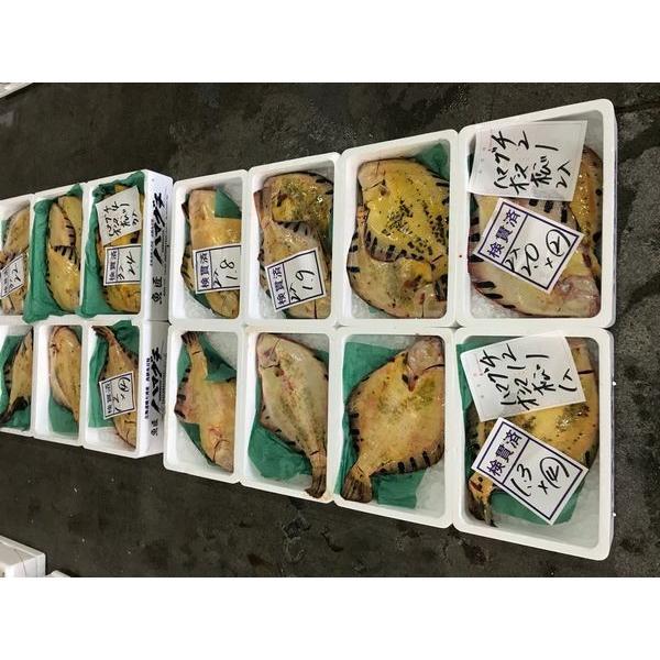 〔高級魚〕北海道産活〆マツカワガレイ3枚(2.2kg前後)〔B〕北港直販☆かれい・カレイ・松川鰈・松皮鰈・王鰈〔代引き不可〕|kitachokuhan|02