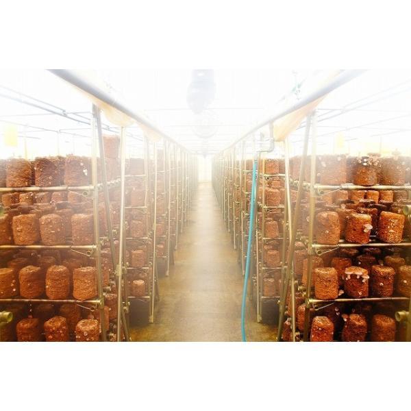 札幌清田産 生椎茸 肉厚な高級「清茸」 Lサイズ8玉×2パック 【産地直送】 「有明の名水」 椎茸 シイタケ しいたけ ギフト 贈答品 名水 肉厚|kitanofurusato-tda|07
