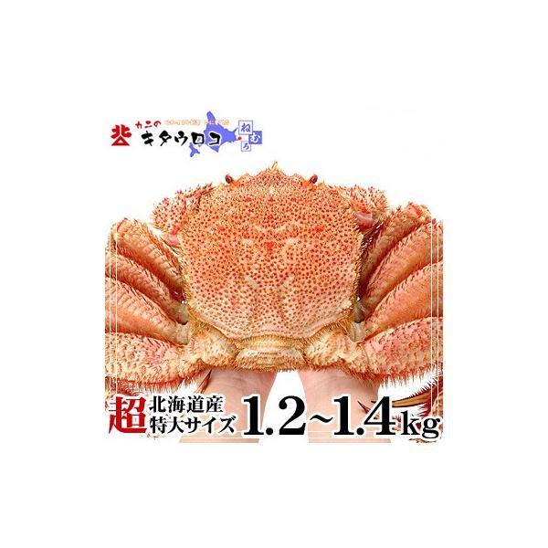 かに 専門店のカニ 毛ガニ 北海道産 超特大サイズ 1.2-1.4kg前後 1尾入 毛がに 毛蟹|kitauroko