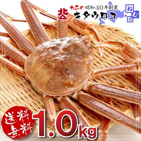 カニ かに 蟹 特大 生ずわいがに姿1尾×1kg前後入 送料無料 お取り寄せ グルメ|kitauroko