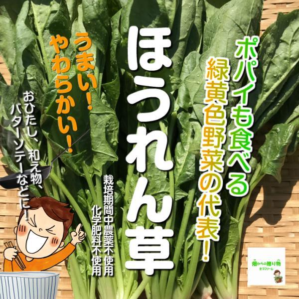 ほうれん草 栽培期間中農薬不使用・化学肥料不使用 埼玉県産 1束約200g ※内側の小さい葉の部分が切ってある場合があります