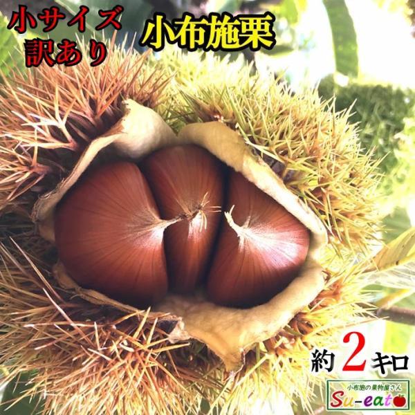 9月下旬〜10月中旬発送 小布施栗 小サイズ 2キロ レビューを書いたら200円クーポン