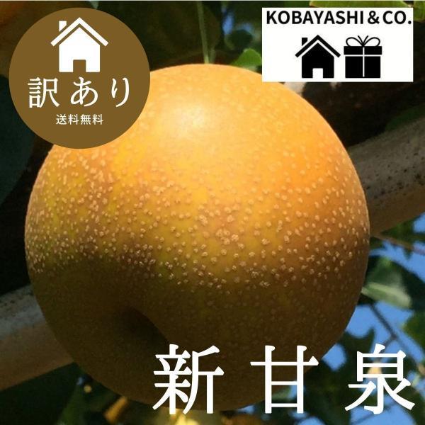 鳥取県産『新甘泉』