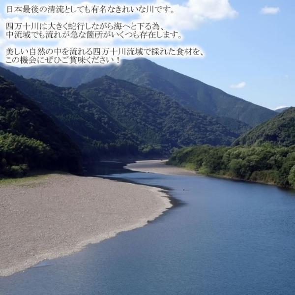 【今週のイチオシ!今ならポイント10倍!】青のり鮎一夜干し 10尾|kochi-bussan|02