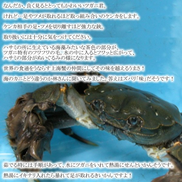 天然ツガニ 生 1kg|kochi-bussan|03