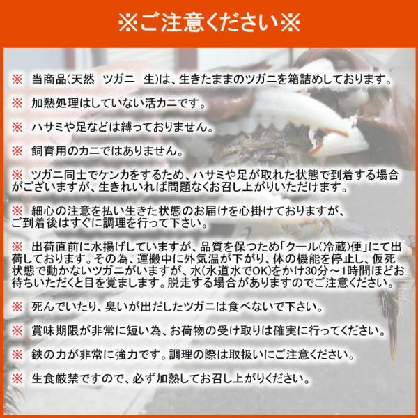 天然ツガニ 生 1kg|kochi-bussan|04