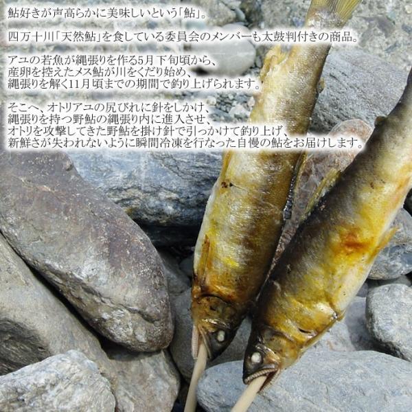 天然 あゆ 友釣り 冷凍 1kg 高知 四万十 鮎|kochi-bussan|03