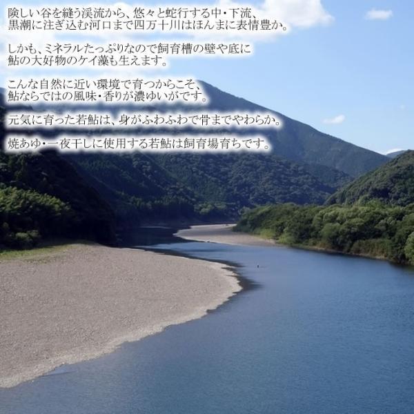 焼鮎5尾(簡易包装)|kochi-bussan|02