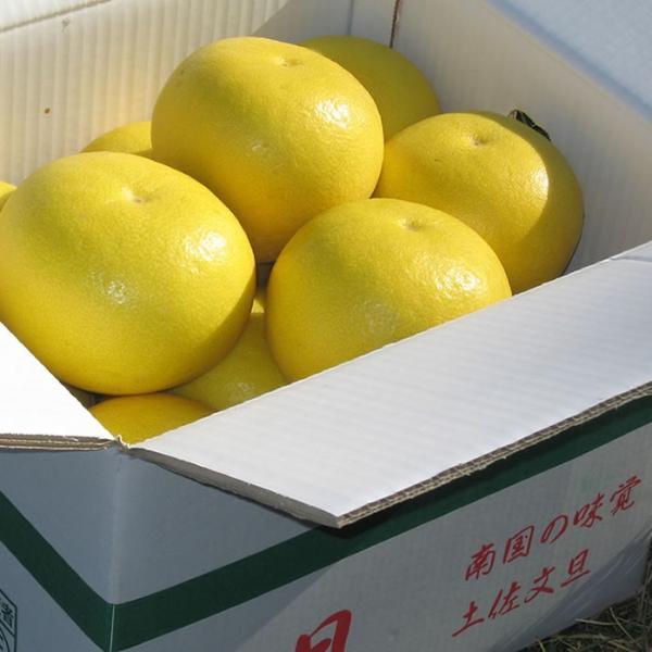 【家庭用】楠瀬さんの土佐文旦 10kg|kochi-bussan|02