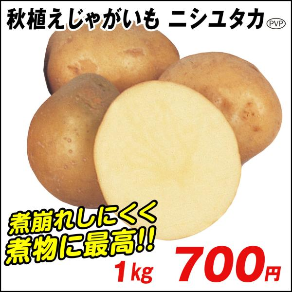 種いも 秋植えじゃがいも ニシユタカ 1kg / じゃが芋 馬鈴薯 ばれいしょ 種芋 種球 じゃが芋のたねいも 種薯 種じゃがいも ポテト 家庭菜園