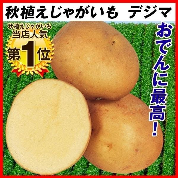 種いも 秋植えじゃがいも デジマ 1kg / じゃが芋 馬鈴薯 ばれいしょ 種芋 種球 じゃが芋のたねいも 種薯 種じゃがいも ポテト 家庭菜園