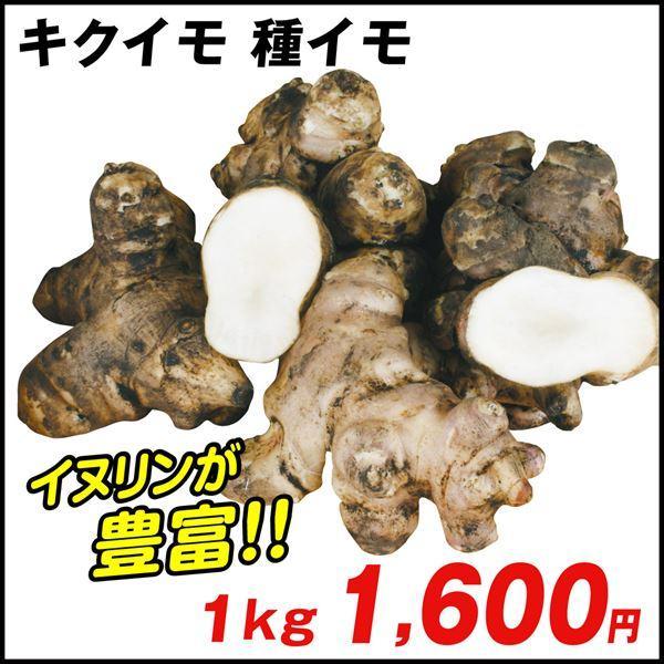 種芋 キクイモ 1kg / たねいも 種いも|kokkaen