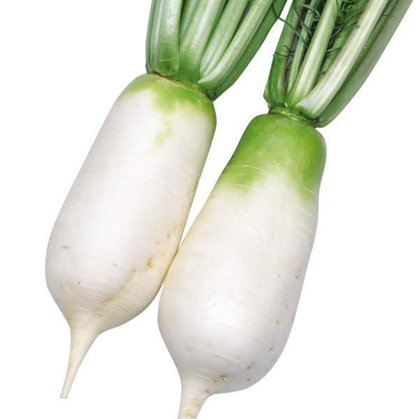 ダイコン 種 野菜たね からみねずみ大根 1袋(2ml) / 野菜のタネ 野菜 種子 大根の種 ダイコン 大根 タネ 【YTC10】 国華園