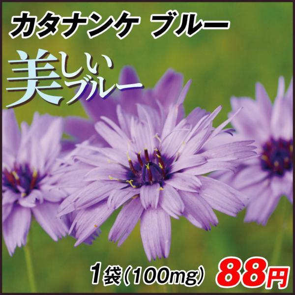 種 花たね 多年草 カタナンケ ブルー 1袋(100mg) / 花のタネ 花 種子 国華園