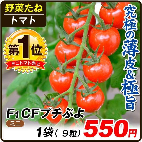 野菜たね トマト ミニトマト F1 CFプチぷよ 1袋(10粒) / タネ 種 ぷちぷよ プチプヨ|kokkaen