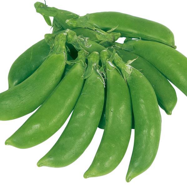 種 野菜たね マメ エンドウ サラダスナップ豌豆 1袋(30ml) / タネ たね まめ 豆 エンドウマメ エンドウ豆 豌豆豆 【YTC31】|kokkaen