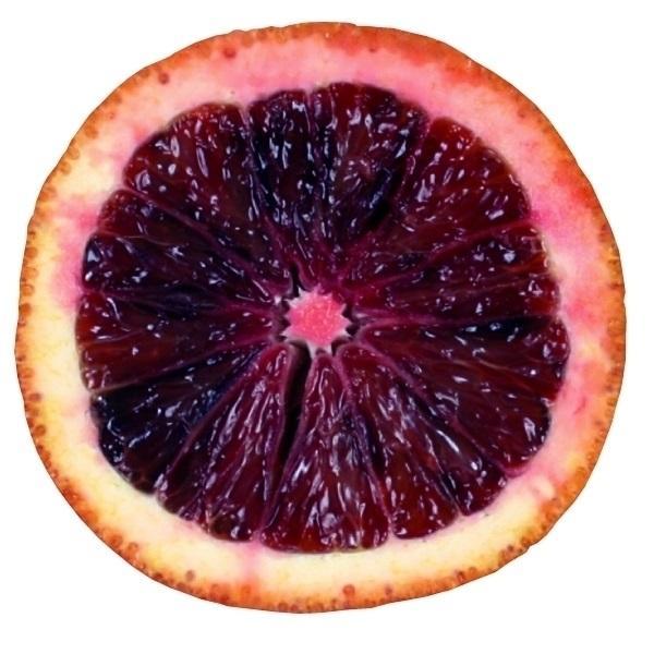 みかん 苗木 ブラッドオレンジ モロ 1株 / ブラッドオレンジ苗 ブラッドオレンジの木 柑橘 果樹苗 国華園