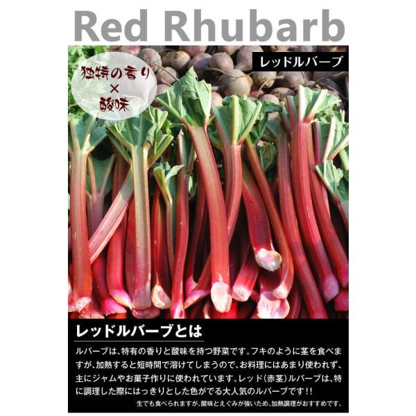 有用植物苗 ルバーブ苗 レッドルバーブ 4株 / 国華園 kokkaen 02