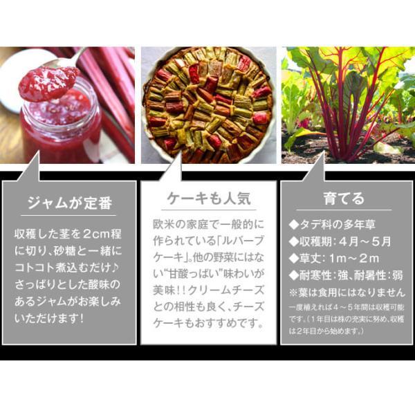 有用植物苗 ルバーブ苗 レッドルバーブ 4株 / 国華園 kokkaen 03