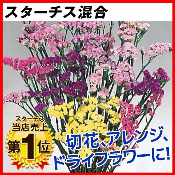 [限定販売]種 花たね スターチス混合 1袋(100mg)|kokkaen