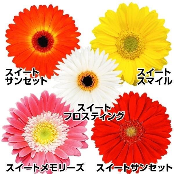 花苗 ガーデンガーベラRセット 5種5株
