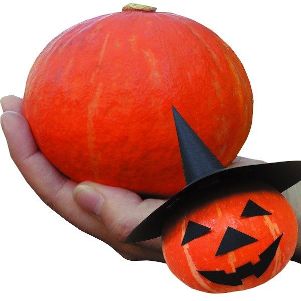 種 野菜たね 南瓜 F1かわいいハロウィーン 1袋(5粒) / 野菜の種 南瓜 かぼちゃ なんきん 国華園 ytsc91|kokkaen