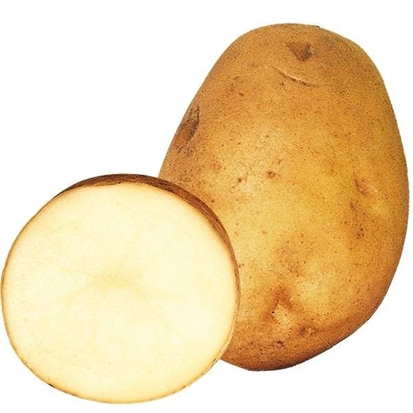 種いも 秋植えじゃがいも 農林1号 1kg / じゃが芋 馬鈴薯 ばれいしょ 種芋 種球 じゃが芋のたねいも 種薯 種じゃがいも ポテト 家庭菜園