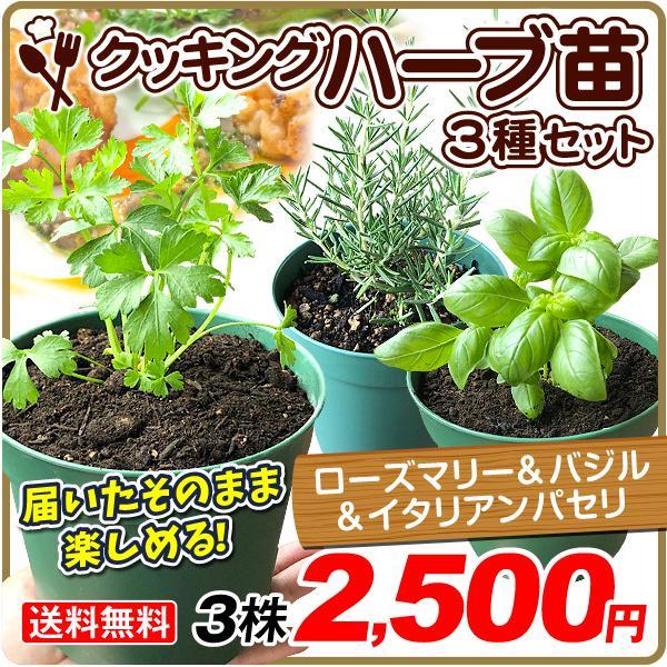 ハーブ 苗 鉢植え ローズマリー&バジル&イタリアンパセリ 4号鉢 3種3鉢 受皿付 セット 国華園