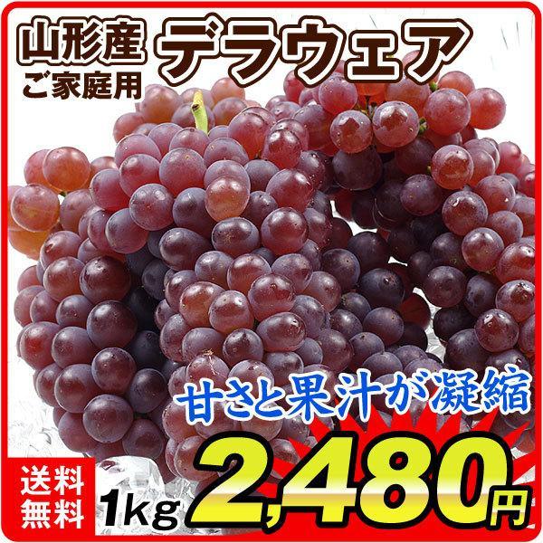 ぶどう デラウェア約1kgお買得 山形産 ご家庭用 葡萄 ブドウ 国華園