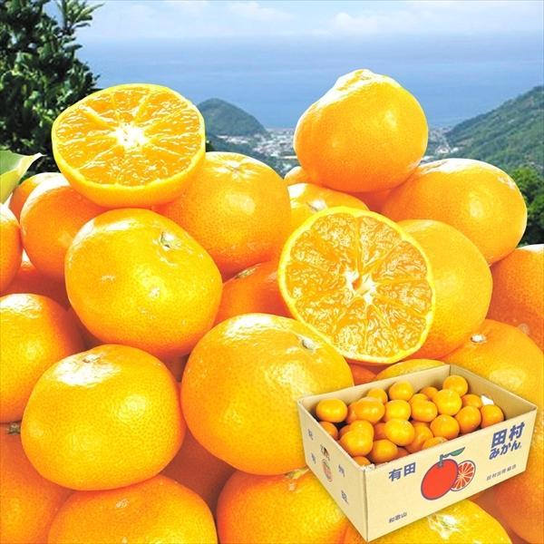みかん 和歌山産 田村みかん 5kg 1箱 送料無料 食品 国華園