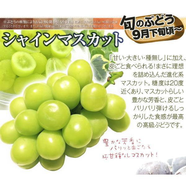 季節のフルーツ食べ比べセット  7種類 1箱 ご家庭用 旬の詰め合わせ フルーツ くだもの 食品 国華園|kokkaen|04