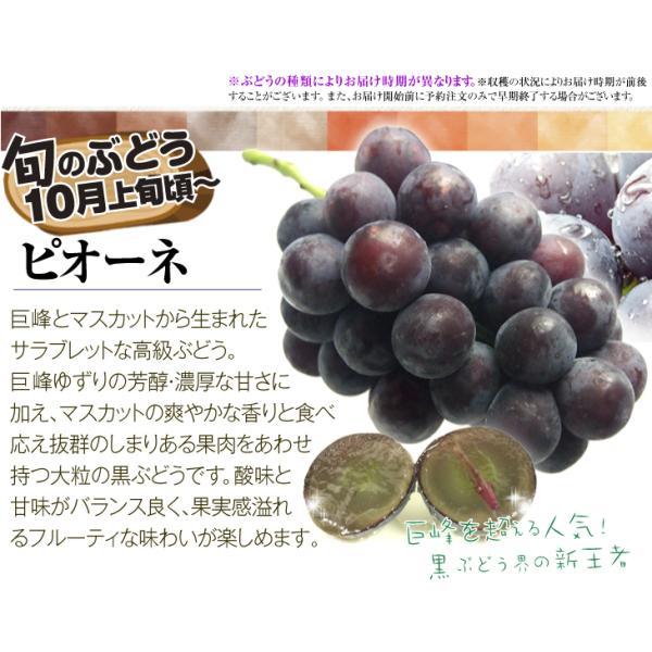 季節のフルーツ食べ比べセット  7種類 1箱 ご家庭用 旬の詰め合わせ フルーツ くだもの 食品 国華園|kokkaen|05