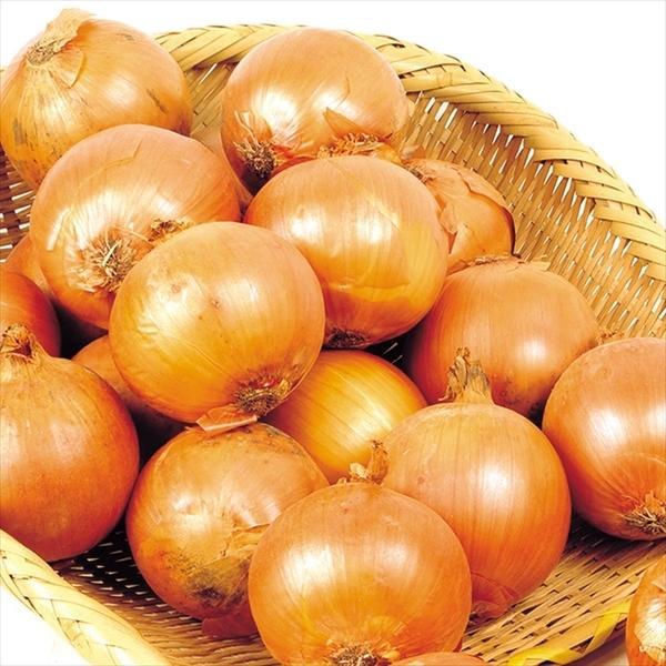 たまねぎ 北海道産 たまねぎ 20kg 1箱 送料無料 食品 国華園