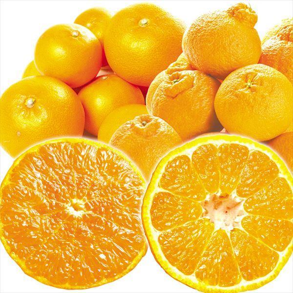 愛媛の特選柑橘セット【せとか&不知火】 2種10kg(各5kg)1組 ご家庭用 送料無料 食品