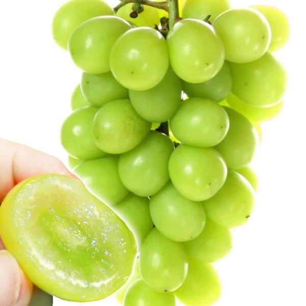 ぶどう 和歌山産 ご家庭用シャインマスカット 2房 1組 送料無料 葡萄 ブドウ フルーツ くだもの 食品 国華園