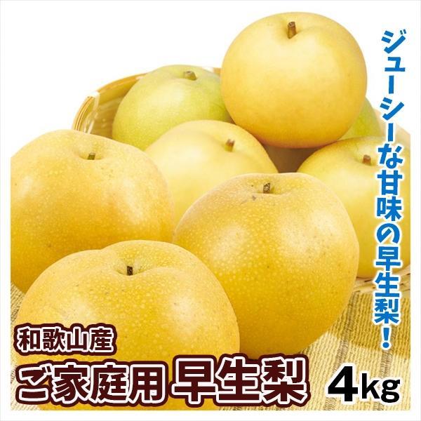 梨 和歌山産 早生梨 4kg 1箱 送料無料 食品 国華園