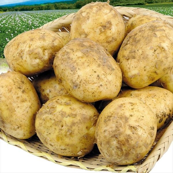 じゃがいも 北海道産 キタアカリ 【大玉】 10kg 1箱 送料無料 食品 国華園