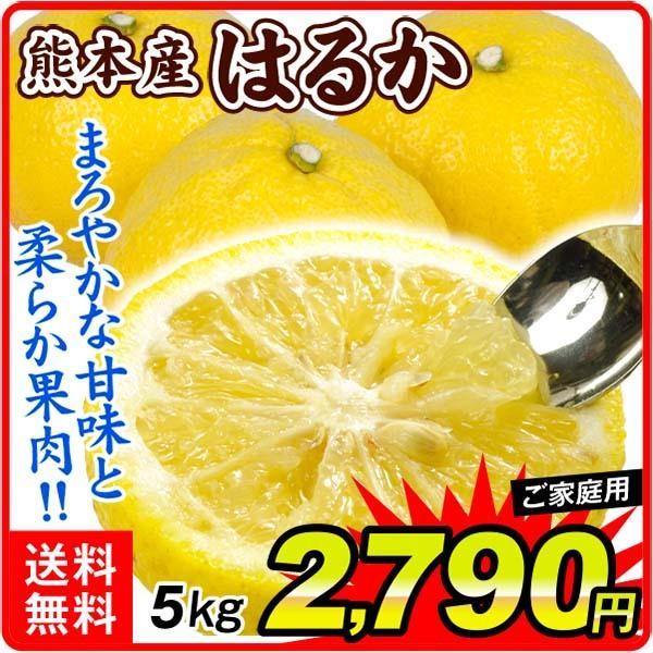 柑橘 熊本産 ご家庭用 はるか 5kg ご家庭用 送料無料 食品