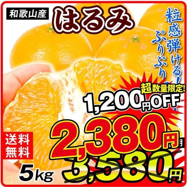 柑橘 和歌山産 紀南のはるみ 5kg ご家庭用 送料無料 食品
