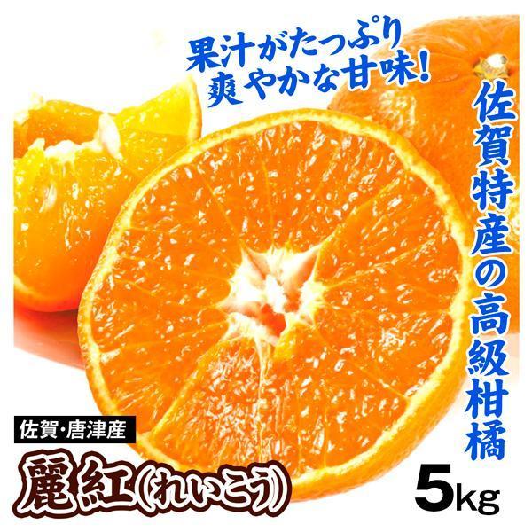 柑橘 佐賀唐津産 麗紅 5kg ご家庭用 送料無料 食品