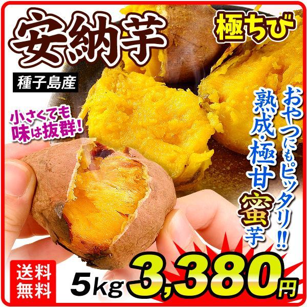 さつまいも 種子島産 安納芋【極ちび】 5kg ご家庭用 送料無料 食品