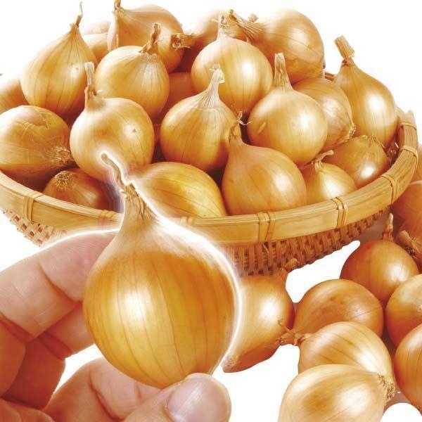 玉ねぎ 北海道産 ペコロス 約2kg (1kg×2箱) 送料無料 食品