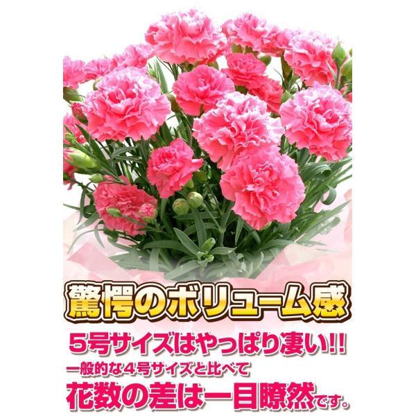 母の日 カーネーション 選べる15色 5号鉢 鉢 花 ギフト プレゼント 贈り物 メッセージカード付き ラッピング ギフトボックス カゴ付き 2019|kokkaen|10