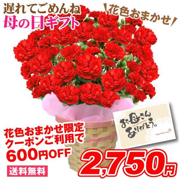母の日 2018 送料無料 カーネーション 5号鉢 人気の2色  鉢 花 ギフト プレゼント 贈り物 メッセージカード付き ラッピング ギフトボックス カゴ付き|kokkaen