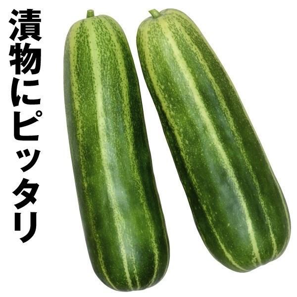 種 野菜たね ウリ 黒門青縞瓜 1袋(2ml) / 野菜のタネ 野菜 種子 瓜 ...