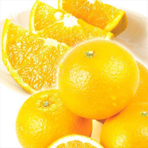 柑橘 和歌山産 ご家庭用 清見オレンジ 5kg ご家庭用 送料無料 食品