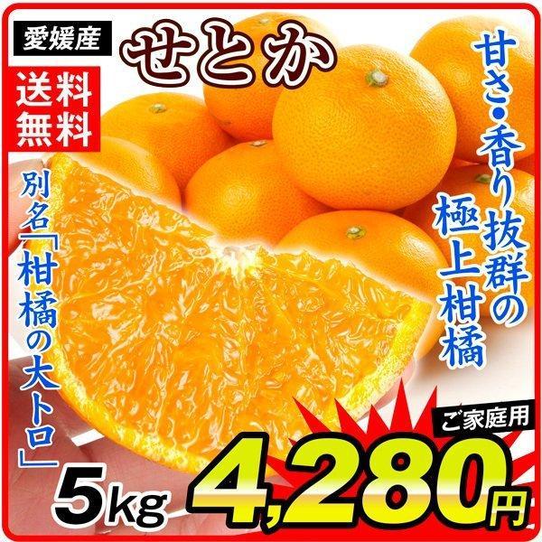 みかん 愛媛産 ご家庭用 せとか 5kg 1箱 送料無料 食品 国華園
