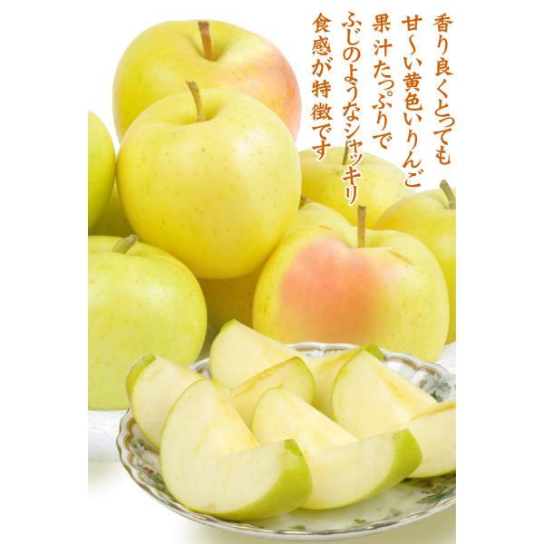 りんご 青森産 とき 訳あり(10kg)林檎 ご家庭用 数量限定 黄金りんご トキ 希少品種 シャキシャキ 国華園|kokkaen|04