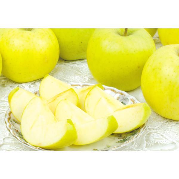 りんご 青森産 とき 訳あり(10kg)林檎 ご家庭用 数量限定 黄金りんご トキ 希少品種 シャキシャキ 国華園|kokkaen|05