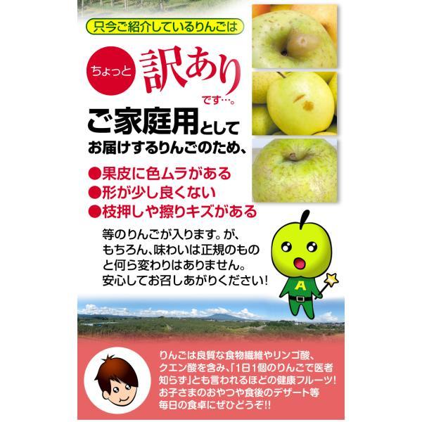 りんご 青森産 とき 訳あり(10kg)林檎 ご家庭用 数量限定 黄金りんご トキ 希少品種 シャキシャキ 国華園|kokkaen|09